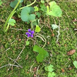 lonely purple flower