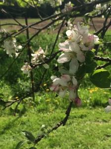 upclose blossoms